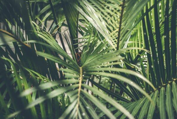 Ontdek de voordelen van planten op kantoor